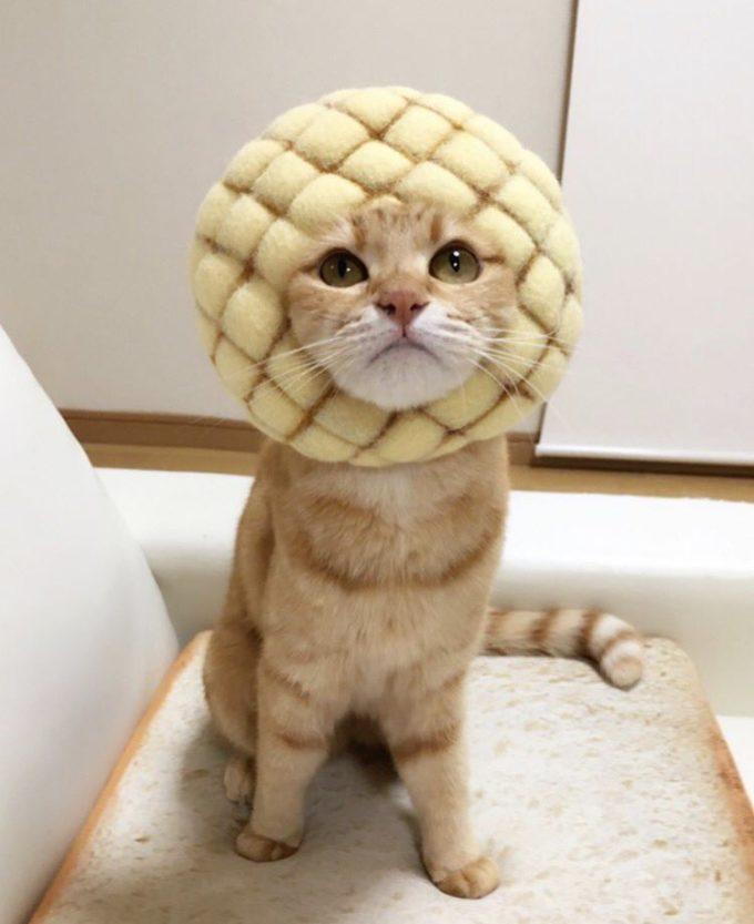 メロンパンと猫