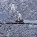 電線を除雪しながら進むリス