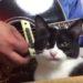 ギタリストが大好きな猫