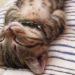 【激カワ】熟睡中の子猫がかわい過ぎる!