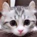 耳がウサギみたいな猫が可愛すぎる!